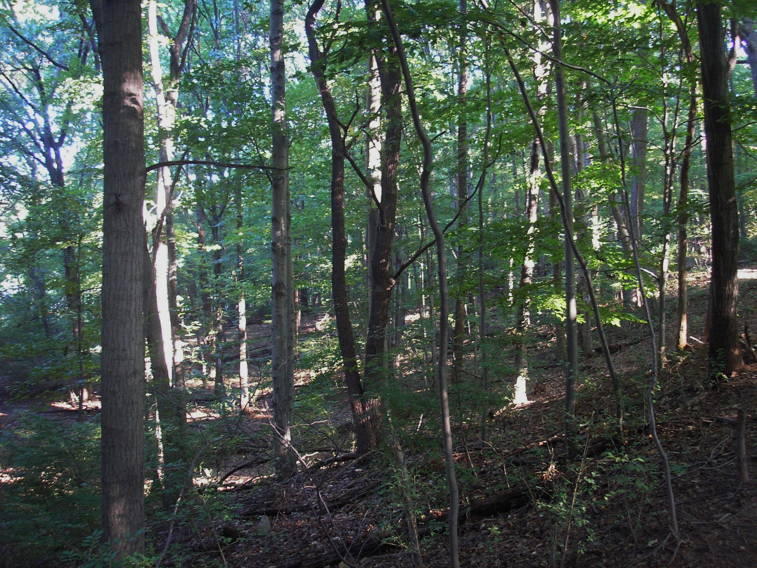 Wooded Slope.JPG