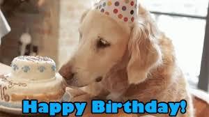 Happy Birthday dog.jpeg