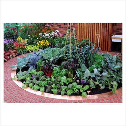 circular veg garden.jpg