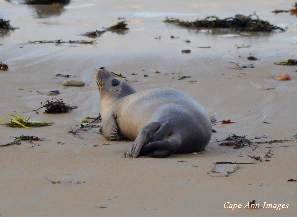 Seal Pup on beach.jpg