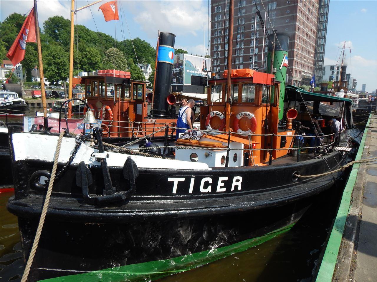 TIGER (5).JPG
