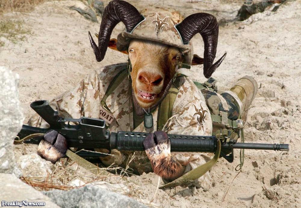 Sergeant-Goat-with-a-Machine-Gun-23499.jpg