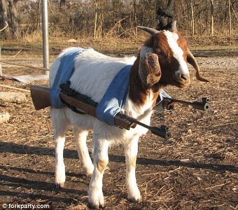 GoatWithGuns.jpg