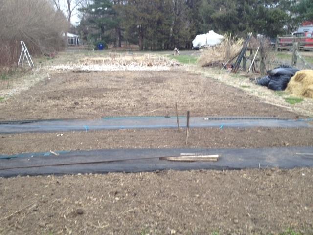 veggi garden May 1.jpg
