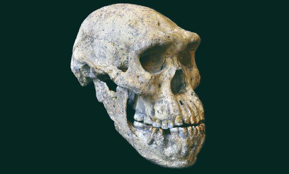 skull__5.jpg