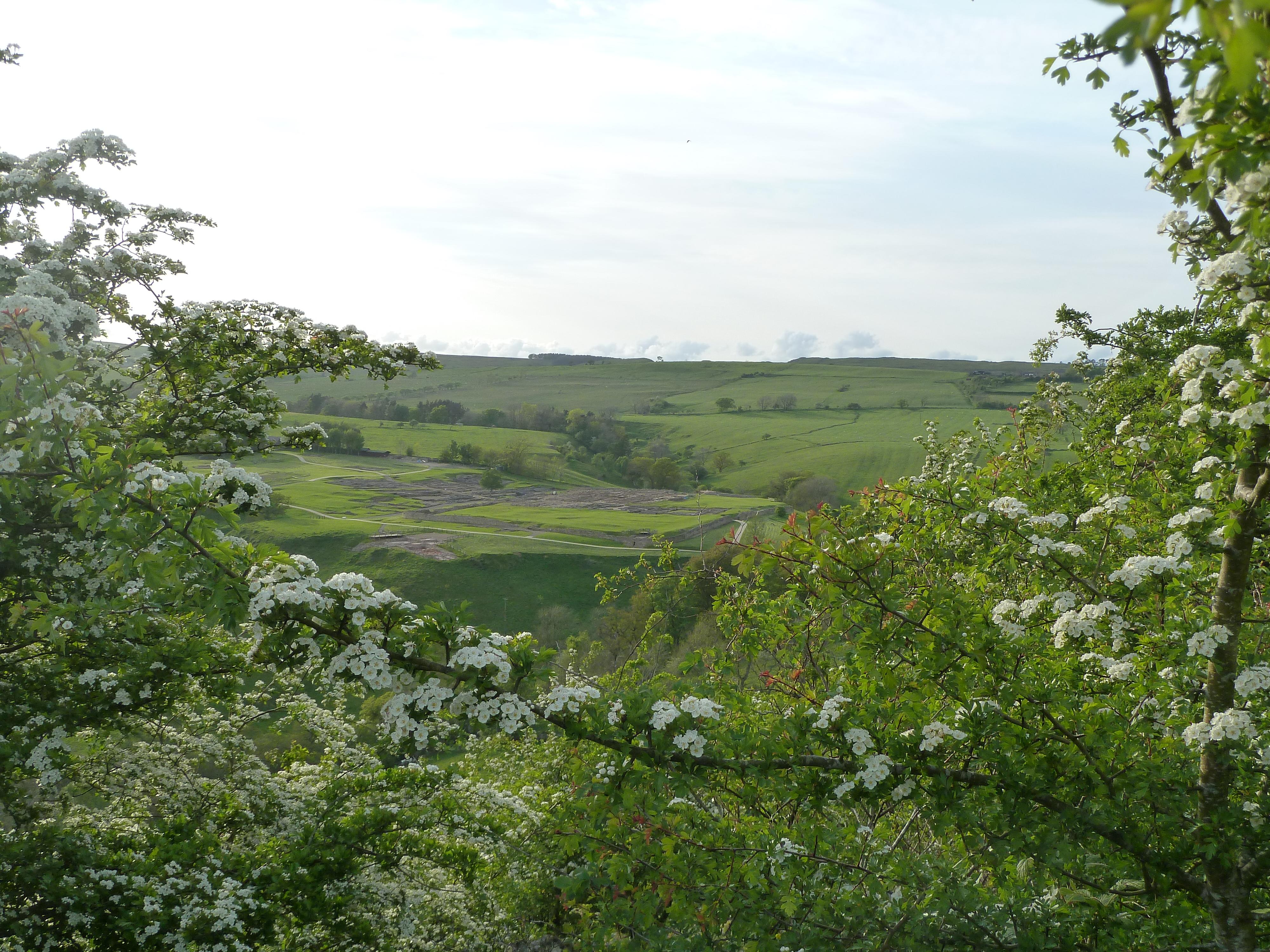 Northumberland_spring_2011_233.jpg