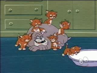 80-27_dog_and_kittens0.JPG